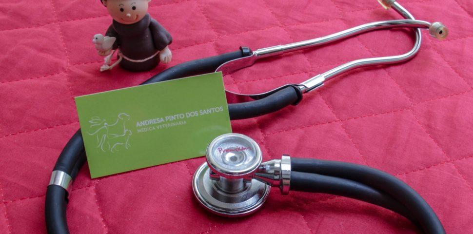 Dra. Andresa Santos | Veterinária