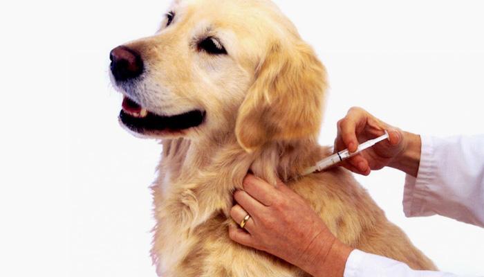 Dra. Andresa Santos | Esquema Vacinal para Cães