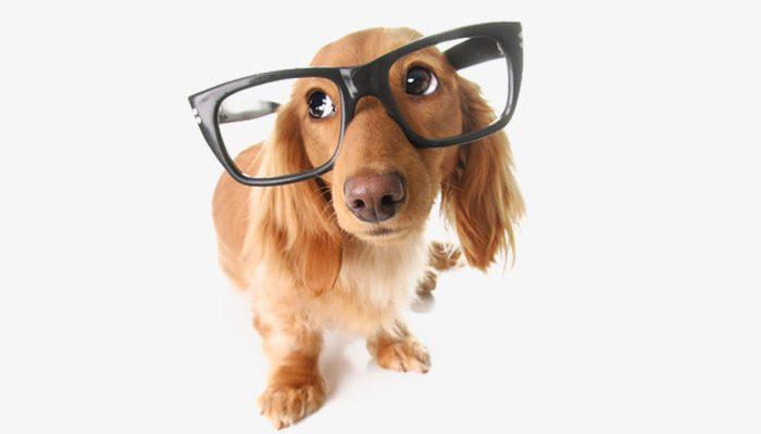 Idade Dos Cães - Quantos Anos Meu Cão Tem?